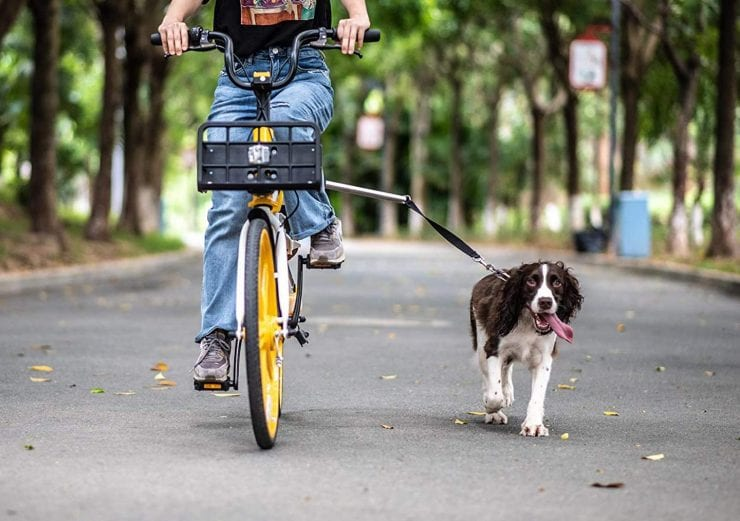 Best Dog Bicycle Leashes in 2021