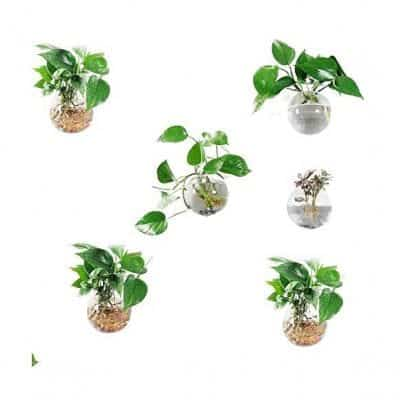 Orimina Pack of 6 Glass Planters Wall Hanging Planter