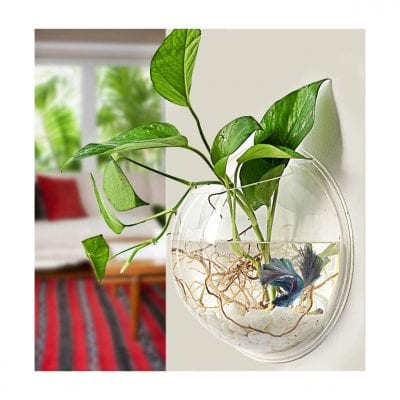 PRUGNA Fish Bowl Acrylic Wall-Mounted Planter Pot