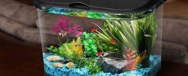 Best LED Aquarium Kits in 2021